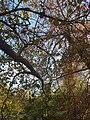 Automne dans les parcs de La Rochelle.jpg