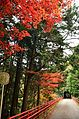 Autumn foliage 2012 (8252581225).jpg