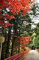 Autumn foliage 2012 (8252581225).jpg