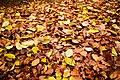 Autumn leaves (6291967656).jpg