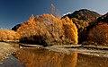 Autumn on the Arrow River NZ (12202357824).jpg