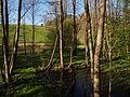 Auwald des Höllbach bei Pielhof 2.jpg