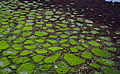 Azulejos naturales (15934593369).jpg