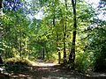 Béthemont-la-Forêt (95), Foutue Route, forêt de Montmorency.jpg