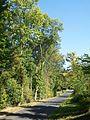 Béthemont-la-Forêt (95), rue de la Croix Frileuse (VC n° 3).jpg