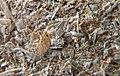 Bûchettes de chauffage sciure et marc de café Heating sticks sawdust coffee grounds 2018 06.jpg