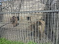 Bakı Zooloji Parkı - 09.JPG