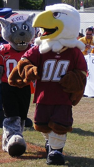 Baldwin the Eagle - Baldwin the Eagle in front of NC State's mascot, Mr. Wuf