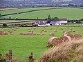 Bales in a field, Tynewydd, Castellan - geograph.org.uk - 925536.jpg