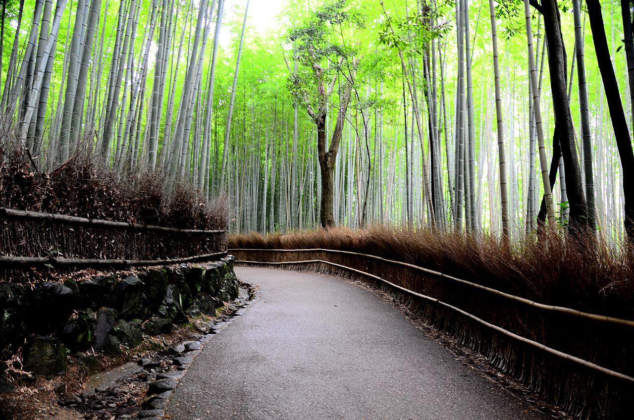Bamboo forest in Arashiyama dans immagini per contemplare 1280px-Bamboo_forest_01