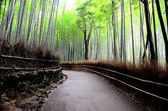 Arashiyama - Bamboo forest in Sagano, Kyoto, Japan