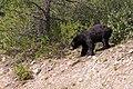 Banff and Jasper NP (1956478882).jpg