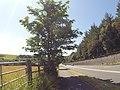 Bangor, UK - panoramio (244).jpg
