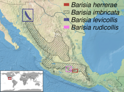 Barisia sp. distribution.png