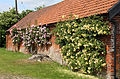 Barn with trained roses, Mashbury, Essex, England 01.JPG