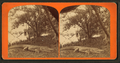 Basking in the sunshine, from Robert N. Dennis collection of stereoscopic views.png