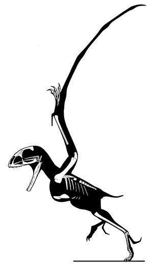 Batrachognathus - Skeletal restoration of the holotype by Jaime Headden
