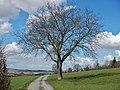 Baum - panoramio (11).jpg