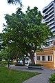 Baum vor dem Mini-Schloss auf Rua Frei Caneca (21928404298).jpg