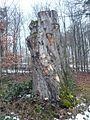 Baumgruppe bei Stangenroth, 1.jpg
