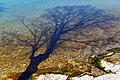 Baumschatten Starnberger See.jpg