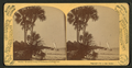 Beautiful group of palmettos, Indian River, Florida, by Barker, George, 1844-1894.png