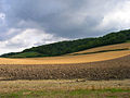 Below the South Downs near Cocking - geograph.org.uk - 225541.jpg