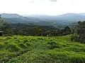 Belwood. Galaha - Central Provice. Sri Lanka. Image 002.jpg