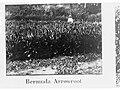 Bermuda Arrowroot, Botanic Gardens, Port Darwin, Northern Territory(GN03763).jpg