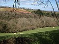 Bickleigh Copse - geograph.org.uk - 1242818.jpg