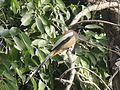 Bird a.jpg