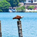 Bird in Batticaloa lagoon.jpg