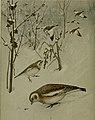 Bird lore (1908) (14750523832).jpg