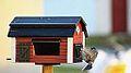 Birdy nam nam (11012532756).jpg