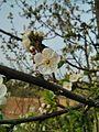 Blüte 2.jpg