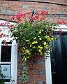 Black Horse Inn hanging basket at Nuthurst West Sussex England 02.jpg