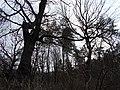 Blahovisnyi, Cherkasy, Cherkas'ka oblast, Ukraine - panoramio (17).jpg