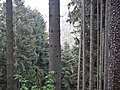 Blick in das Teinachtal - panoramio.jpg