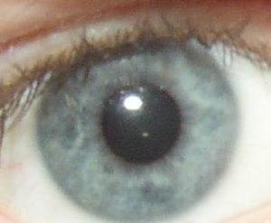 Tyndall effect - A blue iris