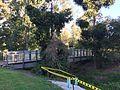 Boardwalks across streams at Sherwood Arboretum 01.JPG