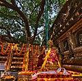 Bodhi tree Bodhgaya.jpg