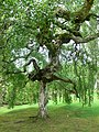 Bodnant Gardens - geograph.org.uk - 804536.jpg