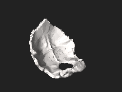 BodyParts3D FJ6411 Occipital bone.stl