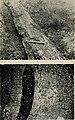 Boletim da Sociedade Portuguesa de Ciias Naturais (1907) (14780897704).jpg