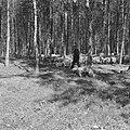 Bosbescherming, parken, herders, schaapskudden, Nationaal Park Veluwezoom, Zypen, Bestanddeelnr 165-0810.jpg