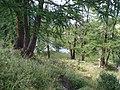 Bosco di napoleone - panoramio.jpg
