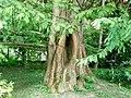 Botanični vrt (3990918408).jpg