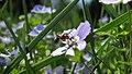 Botanic garden - Cluj-Napoca (5688272888).jpg