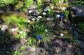 Botanical garden T.U.Delft in 2015 07.JPG