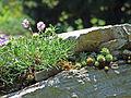 Botanischer-garten-ffm010.jpg